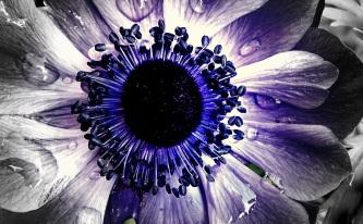 eye of beho